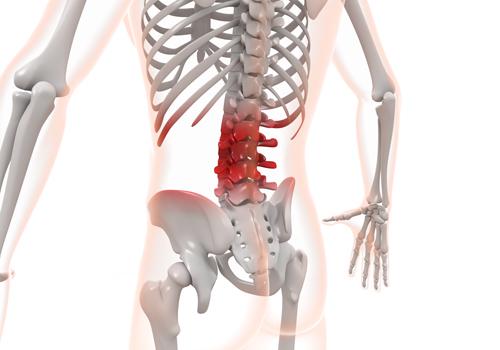 腰痛気味の背骨