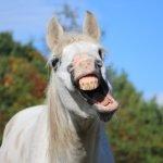 あくびをするアホ面の馬
