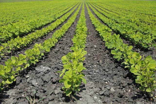 作物の育つ土壌